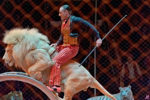 запашный_белый лев