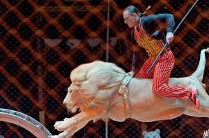 прыжок белого льва