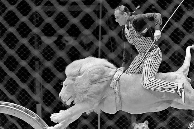 прыжок белого льва_чб