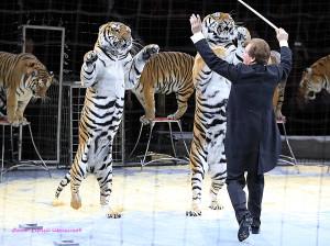 номер с тиграми_5