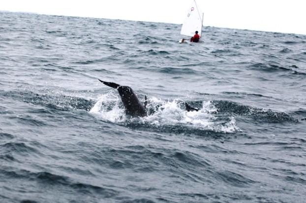 Тренировка с дельфинами_6519