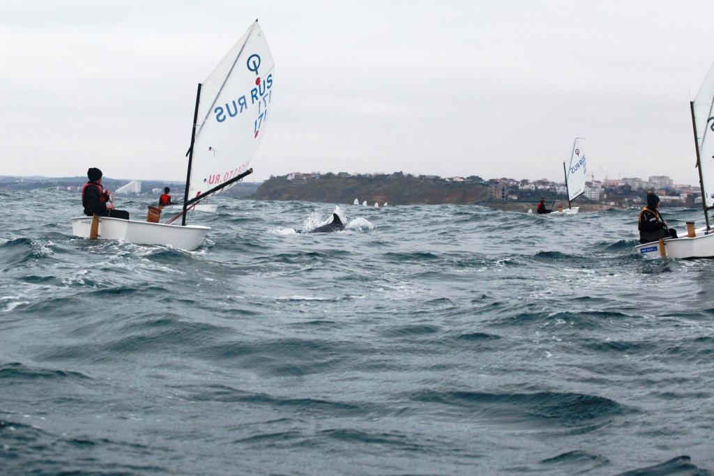 тренировка с дельфинами_6558