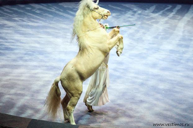 Цирк Дарьи Костюк_6243