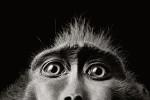 тим флэк глаза обезьяны